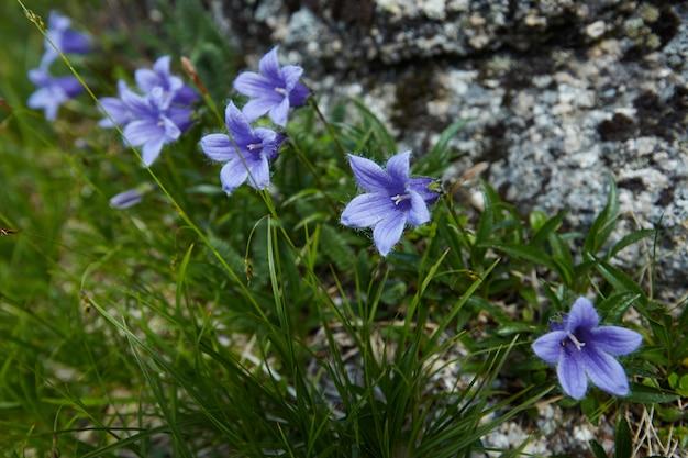 Ruscelli di montagna favolosi, vegetazione lussureggiante e fiori intorno. acqua di sorgente scongelata dalle montagne. viste magiche di alte montagne, prati alpini