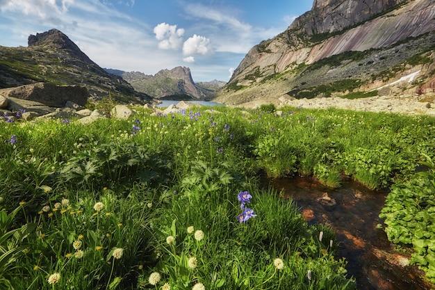 Favolosi ruscelli di montagna, vegetazione lussureggiante e fiori intorno. acqua di sorgente scongelata dalle montagne