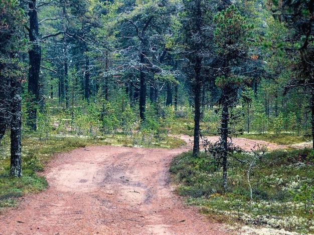 Favolosa foresta settentrionale con una strada tortuosa