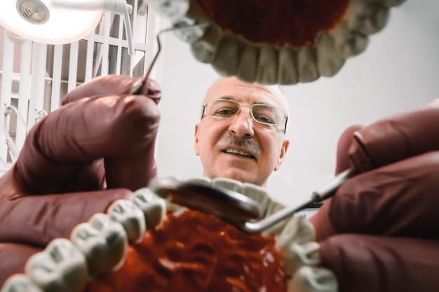 Fronte del dentista maschio concentrato senior che si siede al tavolo e che tiene gli strumenti dentali nelle mani e che fa il trattamento d'imitazione sul modello del dente dei campioni della mascella in studio dentistico, vista dall'interno delle mascelle
