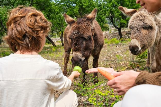 Madre senza volto e bambino che alimentano simpatici asini in campagna