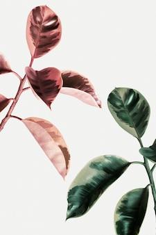 Effetto sbiadito su una pianta di gomma indiana