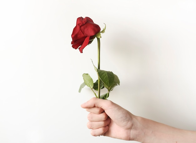 Fiore appassito come simbolo della giovinezza e dell'amore del passato