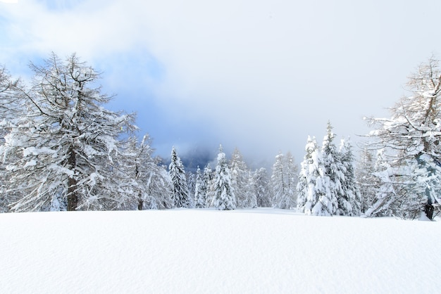 Fiabesco paesaggio invernale innevato sulle alpi italiane