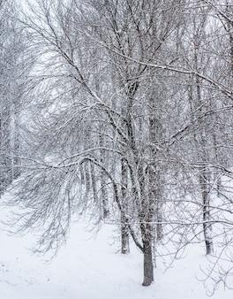 Fiabeschi soffici rami di alberi coperti di neve paesaggi naturali con neve bianca e tempo freddo