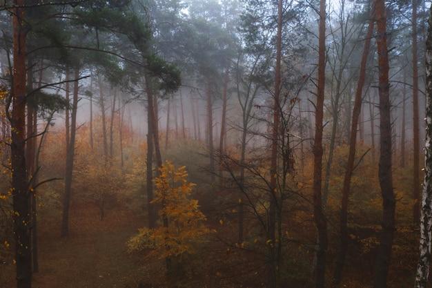 Fiabesca nebbiosa foresta autunnale decidua. bella fitta foresta colorata