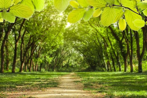 Paesaggio forestale da favola