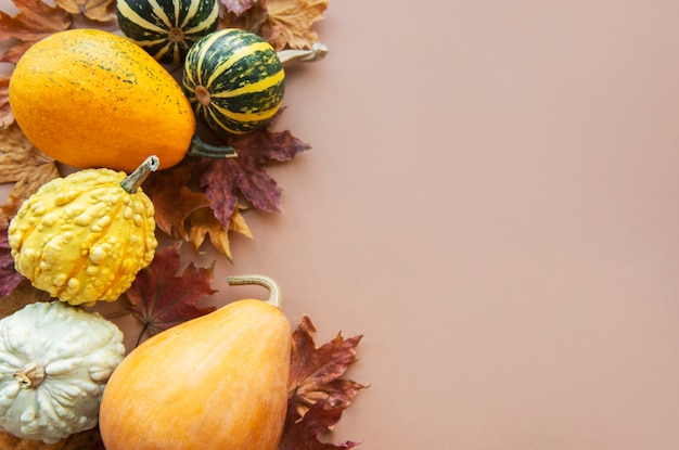 Sfondo autunnale con zucche multicolore su sfondo marrone