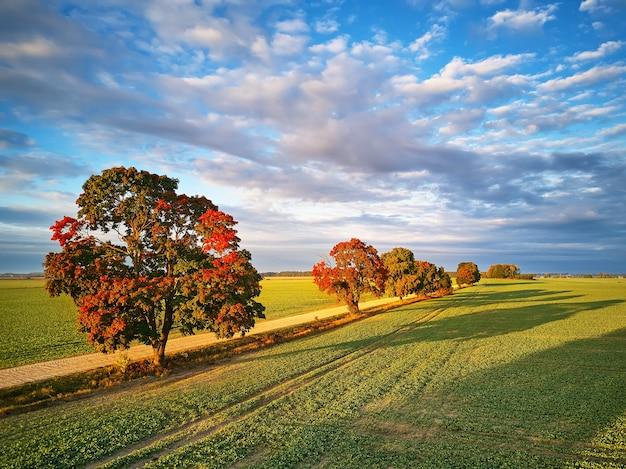 Colori autunnali bellissimo albero strada sterrata campi agricoli settembre mattina soleggiata cloud sky shadows
