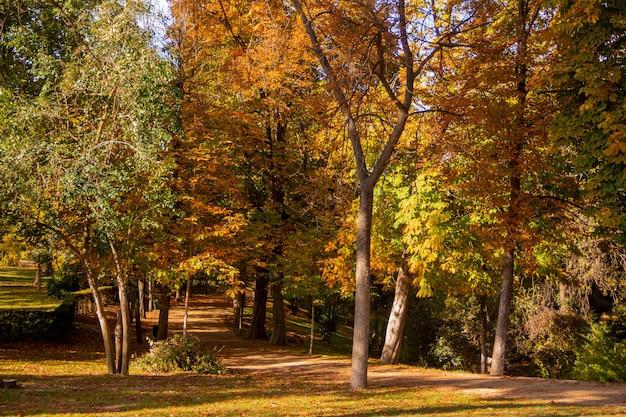 I colori dell'autunno in un parco con alberi rigogliosi e foglie cadute.