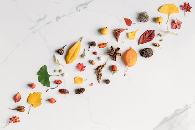 Concetto di caduta. vista dall'alto di foglie d'autunno - geranio, betulla, pioppo, ginkgo, frutti di bosco, fiori, nocciole, orecchini di tiglio secco, castagna spinosa su superficie di marmo bianco. lay piatto, copia dello spazio.