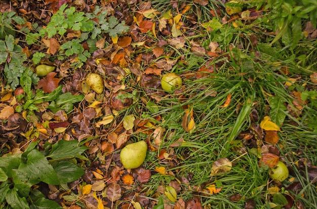 Fondo soleggiato di autunno del fogliame di caduta sull'erba nella luce soleggiata di mattina