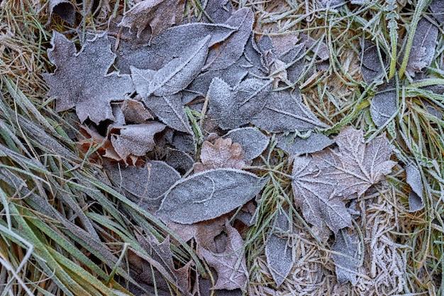 Fogli di autunno caduti coperti di brina. ciao autunno