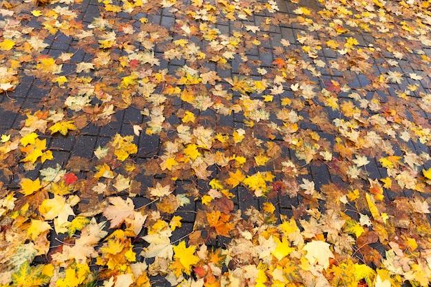 Fogliame caduto al suolo di alberi decidui nella stagione autunnale, primo piano del fogliame degli alberi dopo la caduta delle foglie autunnali, il fogliame giace e marcisce e si asciuga