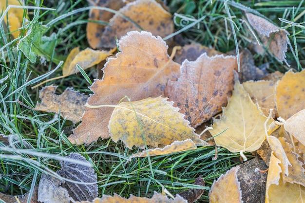 Foglie cadute con gelo bianco, concetto di autunno