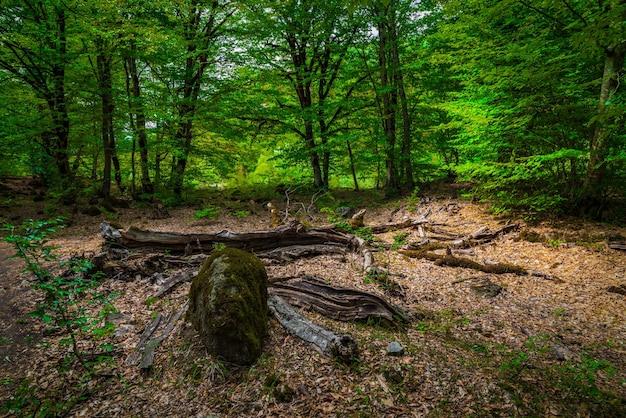 Albero caduto nella misteriosa foresta verde