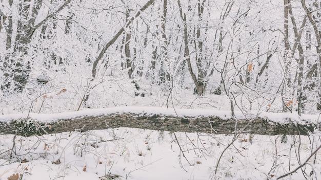 Albero caduto nella foresta invernale