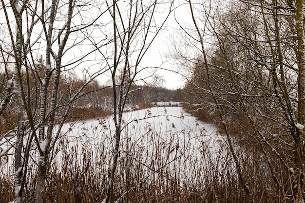 Neve bianca caduta dopo una nevicata e alberi senza foglie in inverno