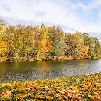 Foglie gialle cadute su erba verde vicino a un lago in un parco in una giornata di sole autunnale sfondo