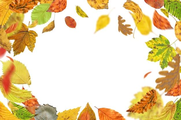 Fogliame autunnale che cade isolato su bianco. foglie di autunno che cadono a terra. foglie d'autunno che cadono e girano Foto Premium