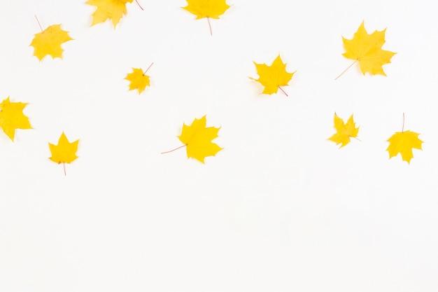Foglie di acero autunnali gialle che cadono su sfondo bianco vista dall'alto