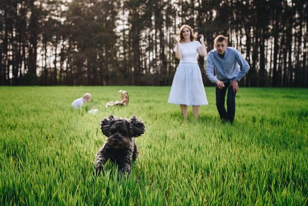 Famiglia nella foresta ad un picnic. siediti in una radura, erba verde. vestiti blu. mamma e papà giocano con il figlio, abbracciano e sorridono. un bambino con gli occhiali. tempo insieme cestino da picnic con cibo. cane domestico.