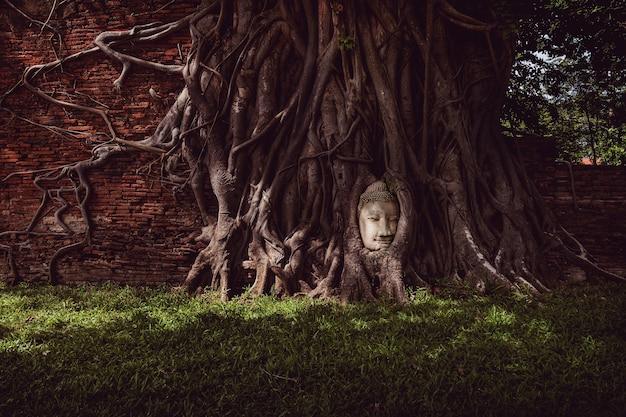 Famosa testa di buddha coperta da un albero di radici che cresce nelle rovine del tempio
