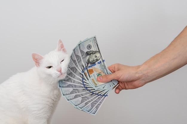 Un fan di dollari in mano d'uomo, un sacco di soldi e un gatto bianco