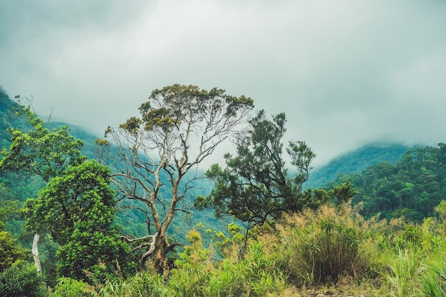 Fantastico paesaggio delle montagne di dalat