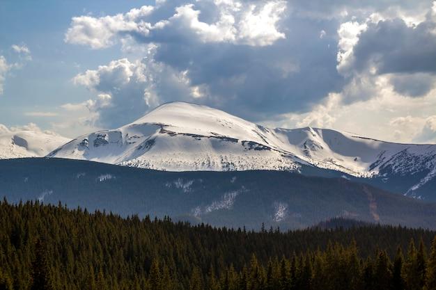 Fantastica vista sulla montagna hoverla nella catena montuosa dei carpazi in una luminosa giornata di sole primaverile. contrasto netto tra pineta scura e neve brillante e brillante sulle cime. bellezza e potere del concetto di natura.