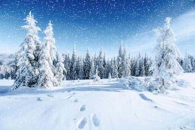 Fantastico paesaggio invernale e sentieri calpestati che conducono nel