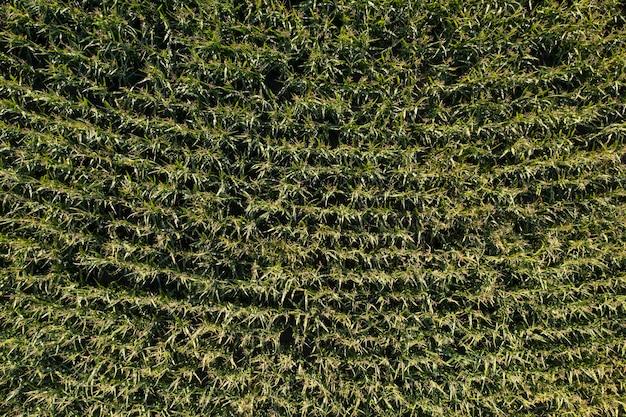 Fattoria campo agricoltura vista dall'alto drone ripresa vista dall'alto