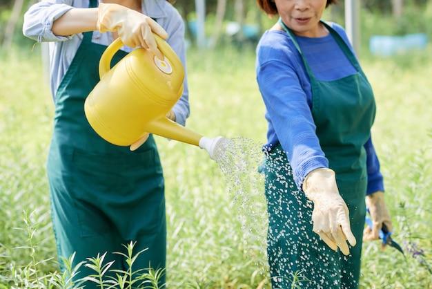 Manodopera agricola che innaffia i fiori