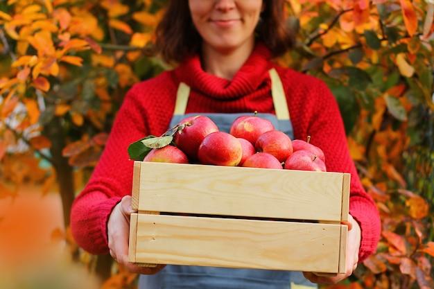 Agricoltore, agronomo mostra un eccellente raccolto biologico in giardino.