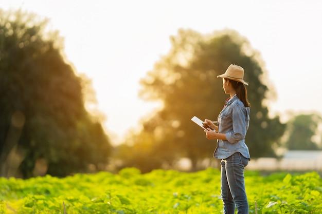 L'agricoltore sta pianificando di coltivare su tablet.