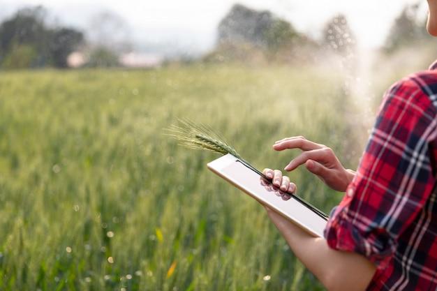Piantagione del campo del raccolto dell'orzo dell'agricoltore che controlla controllo di sistema idrico e di qualità dal concetto moderno di tecnologia di agricoltura della compressa.