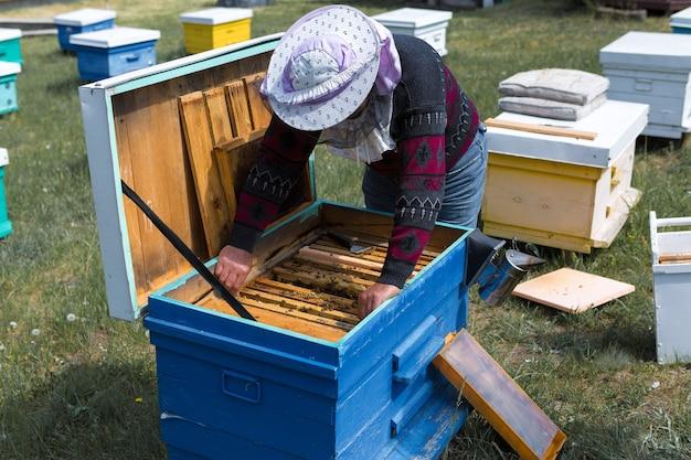Un contadino su un apiario tiene in mano telai con favi di cera.