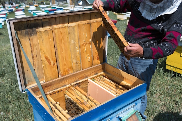 Un contadino su un apiario tiene in mano cornici con favi di cera