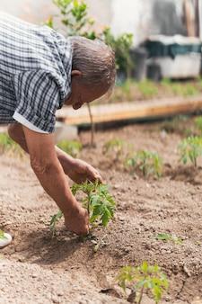 Agricoltore che si prende cura di una pianta durante la stagione della semina
