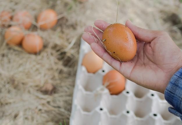 Mano del coltivatore che tiene l'uovo sulla sfocatura dell'immagine delle uova sul fieno con pannello di carta dell'uovo. allevamento di polli biologici.