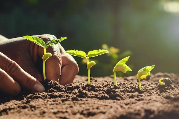 Mano del coltivatore che pianta i fagioli in giardino