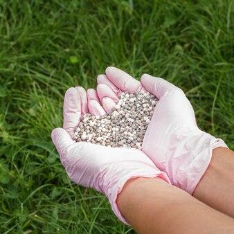 Mani dell'agricoltore in guanti di nitrile rosa che tengono fertilizzante chimico con erba verde sulla superficie