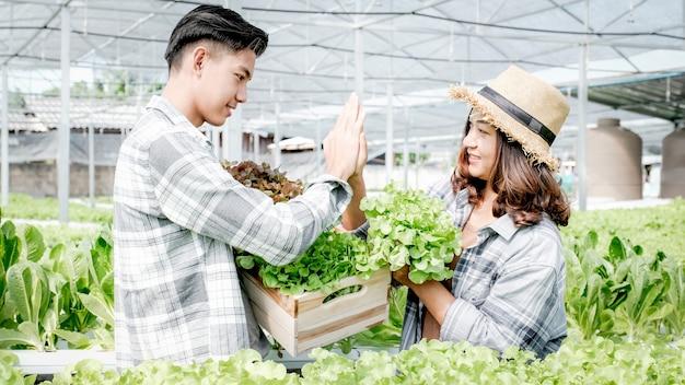 Agricoltore che raccoglie insalata biologica di verdure, lattuga dalla fattoria idroponica per i clienti e prepara il cinque.