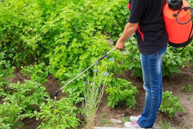 L'agricoltore sta proteggendo le piante di patate da malattie fungine o parassiti con uno spruzzatore a pressione in giardino