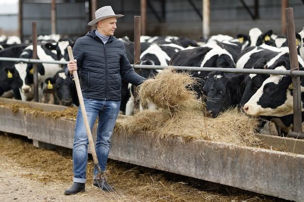 L'agricoltore sta lavorando in una fattoria con mucche da latte