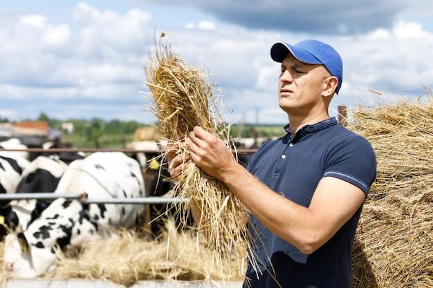 Un contadino guarda mangime da fieno in un allevamento di mucche