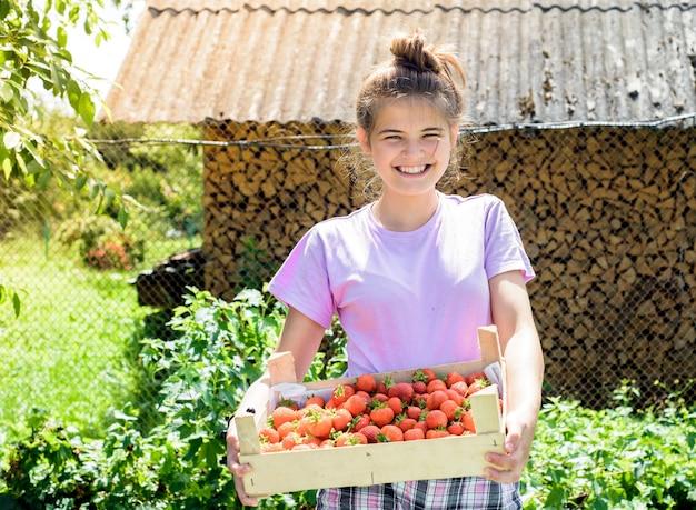 Coltivatore raccoglie fragole da un cespuglio.