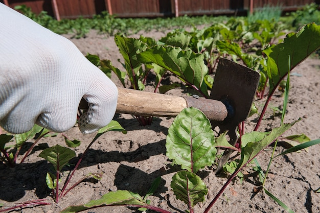 Il contadino rimuove le erbacce