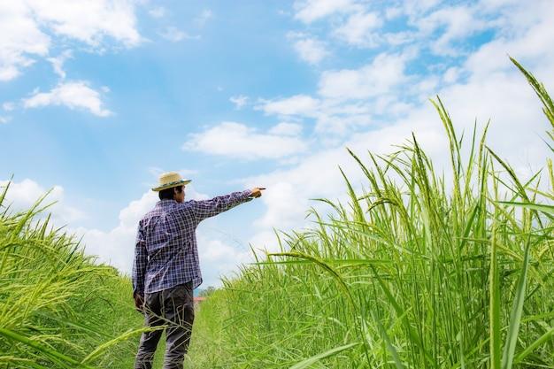 Agricoltore sui campi di riso stanno cercando di iniziare a raggiungere con il cielo blu.