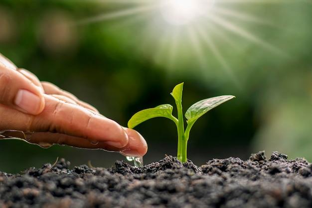Le mani del contadino annaffiano e si prendono cura degli alberi, idee di conservazione della natura sostenibile e giornata della terra.